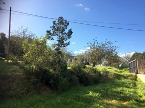Beautiful Land with house to refurnish in St. Eulalia!